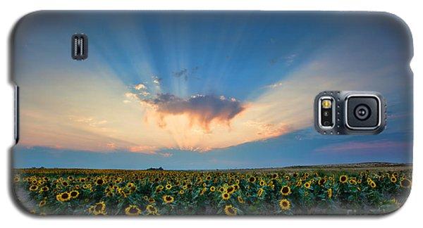 Sunflower Field At Sunset Galaxy S5 Case by Jim Garrison