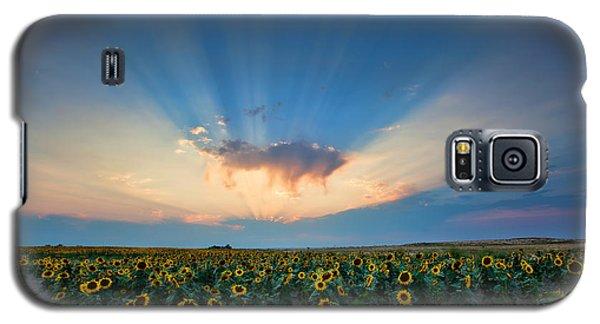 Sunflower Field At Sunset Galaxy S5 Case
