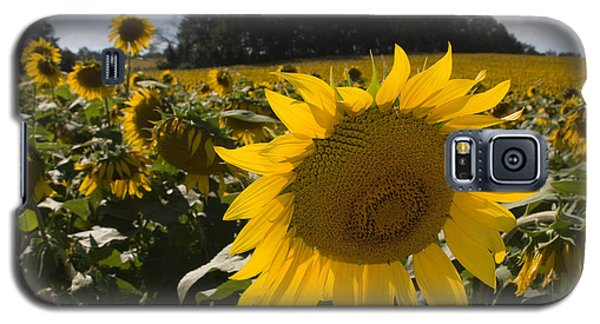 Galaxy S5 Case featuring the photograph Sunflower Field by Chris Scroggins