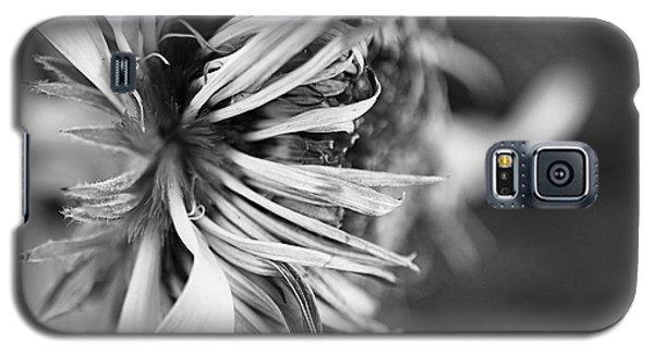 Sunflower Focus Galaxy S5 Case