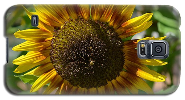 Sunflower Glory Galaxy S5 Case by Luther Fine Art