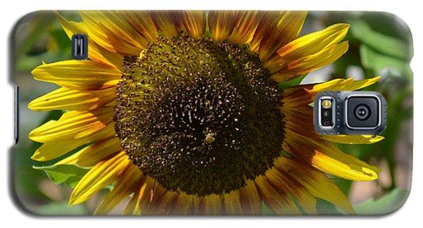 Sunflower Glory Galaxy S5 Case