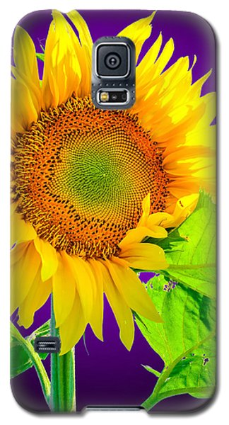 Sunflower Glow Galaxy S5 Case