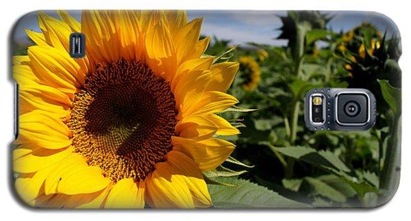 Sunflower Glow Galaxy S5 Case