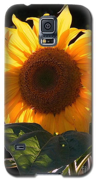 Galaxy S5 Case featuring the photograph Sunflower - Golden Glory by Janine Riley