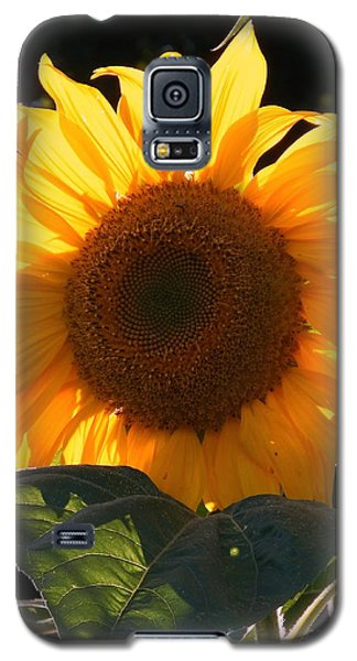 Sunflower - Golden Glory Galaxy S5 Case