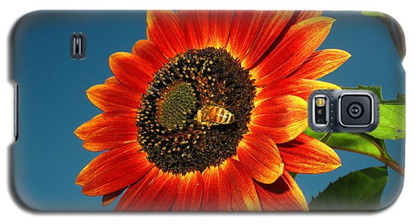 Galaxy S5 Case featuring the photograph Sunflower Honey Bee by Joyce Dickens