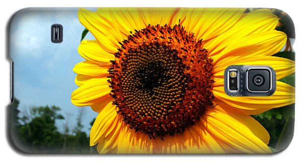 Sunflower In Summer Galaxy S5 Case by Deborah Fay