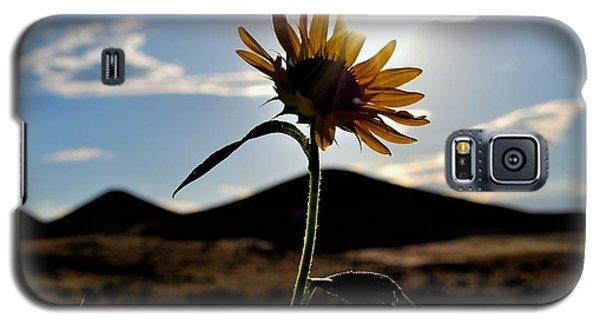 Galaxy S5 Case featuring the photograph Sunflower In The Sun by Matt Harang