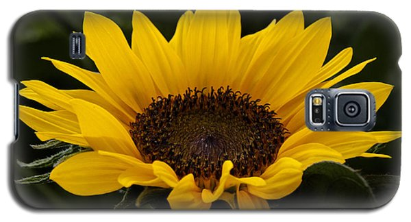 Galaxy S5 Case featuring the photograph Sunflower by Inge Riis McDonald