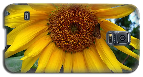 Galaxy S5 Case featuring the photograph Sunflower by Kara  Stewart