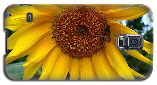 Sunflower Galaxy S5 Case by Kara  Stewart