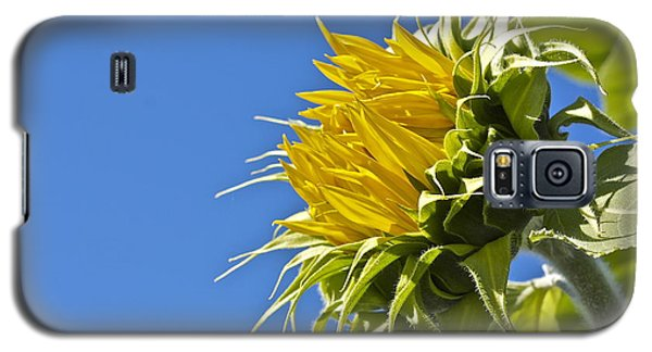 Galaxy S5 Case featuring the photograph Sunflower by Linda Bianic