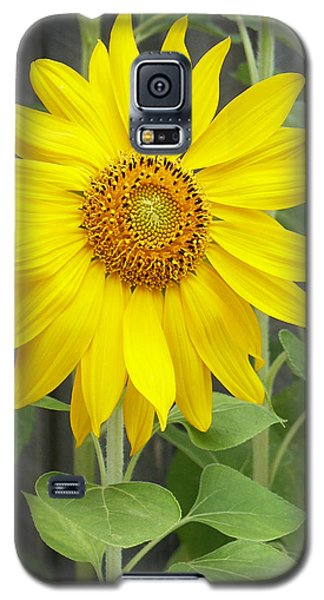 Sunflower Galaxy S5 Case by Lisa Phillips