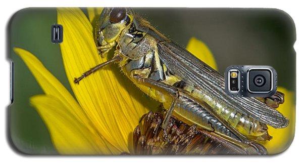 Sunflower Love Galaxy S5 Case by Ernie Echols