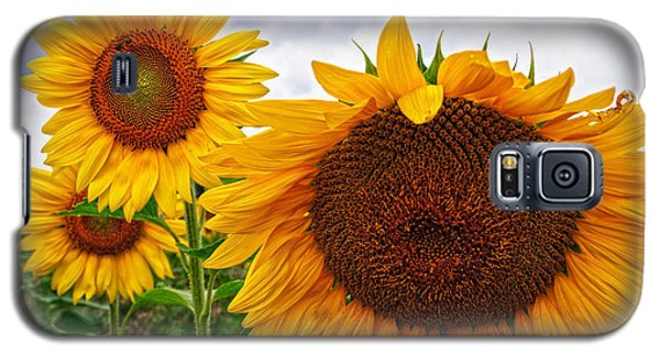 Sunflower Mama And Her Daughters  Galaxy S5 Case
