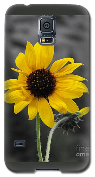 Galaxy S5 Case featuring the photograph Sunflower On Gray by Rebecca Margraf