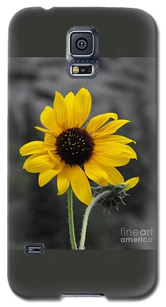 Sunflower On Gray Galaxy S5 Case by Rebecca Margraf