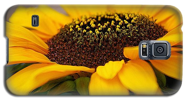 Galaxy S5 Case featuring the photograph Sunflower Portrait Two by John S