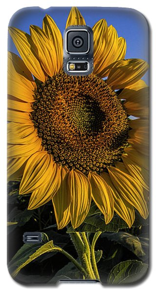 Galaxy S5 Case featuring the photograph Sunflower by Rob Graham
