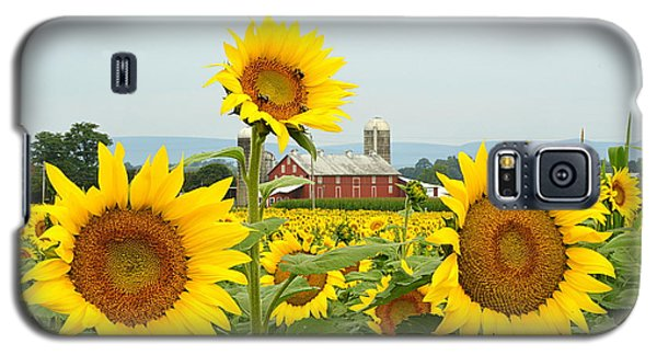 Sunflower Splendor #1 - Mifflinburg Pa Galaxy S5 Case