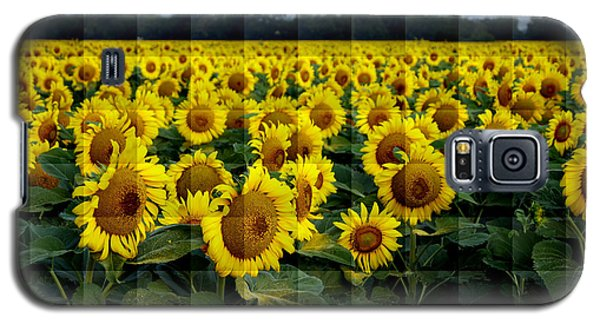 Galaxy S5 Case featuring the photograph Sunflower Squared by Kathy Churchman