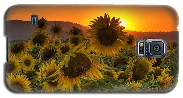 Sunflower Sun Rays Galaxy S5 Case