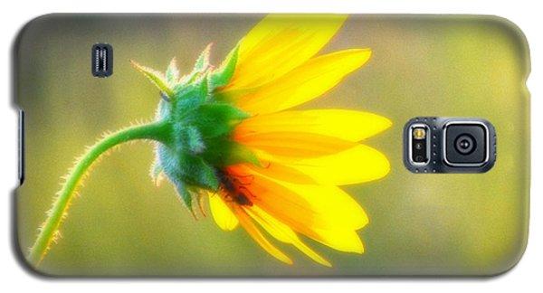 Sunflower Sunrise 6 Galaxy S5 Case by Diane Alexander