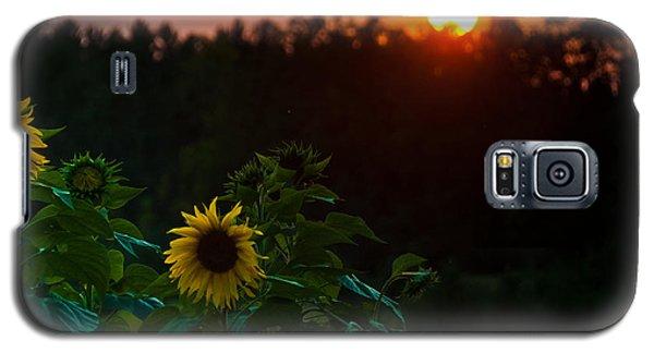 Sunflower Sunset Galaxy S5 Case by Cheryl Baxter