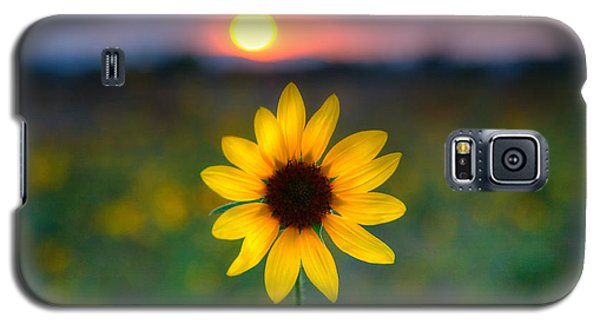 Sunflower Sunset Galaxy S5 Case by Peter Tellone