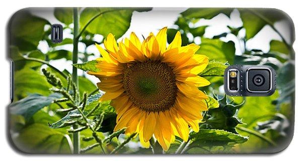 Sunflower Vignette Edges Galaxy S5 Case
