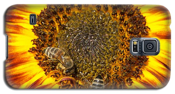 Orange Galaxy S5 Case - Sunflower With Bees by Matthias Hauser