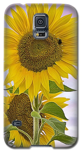 Sunflower With Colorful Evening Sky Galaxy S5 Case