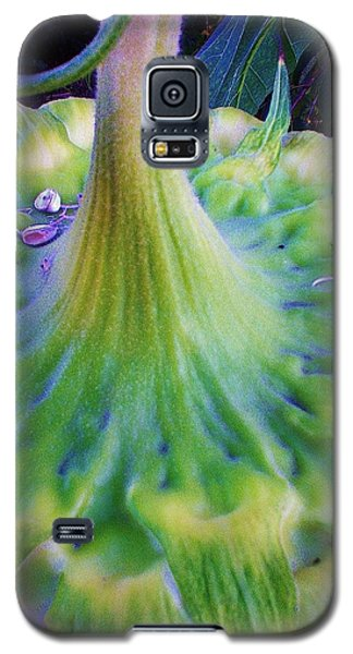Galaxy S5 Case featuring the photograph Sunflower...moonside 1 by Daniel Thompson