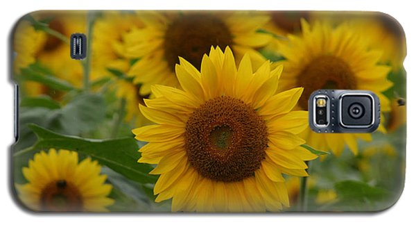 Sunflowers At The Farm Galaxy S5 Case by Denyse Duhaime
