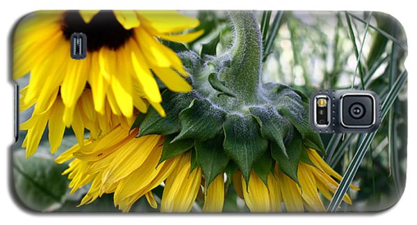 Galaxy S5 Case featuring the photograph Sunflowers by Denise Pohl