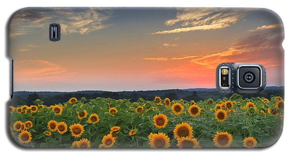 Sunflowers In The Evening Galaxy S5 Case