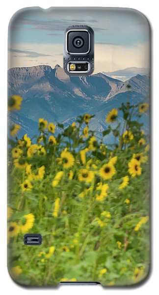 Sangre De Cristo Galaxy S5 Case - Sunflowers In The San Luis Valley by Kennan Harvey