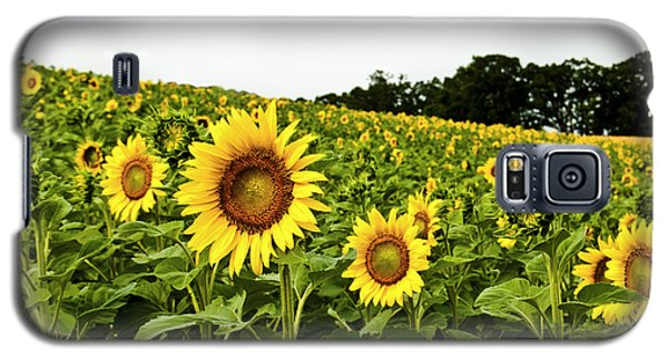 Sunflowers On A Hill Galaxy S5 Case