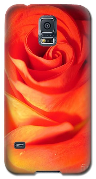Sunkissed Orange Rose 10 Galaxy S5 Case