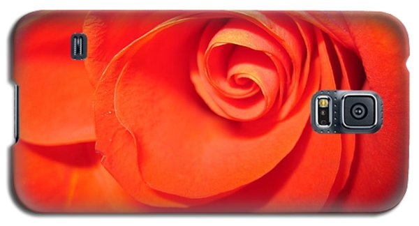 Sunkissed Orange Rose 9 Galaxy S5 Case