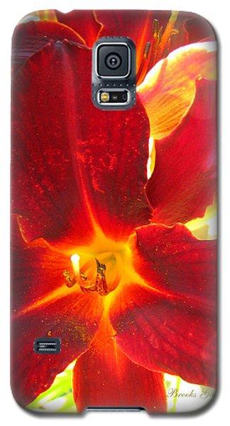 Galaxy S5 Case featuring the photograph Sunlight And Daylilies A Match Made In Heaven by Brooks Garten Hauschild