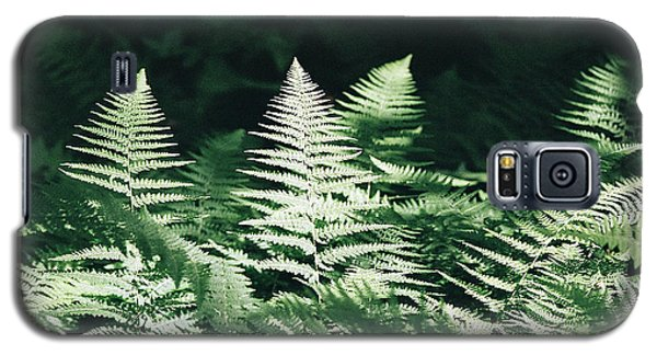 Galaxy S5 Case featuring the photograph Sunlight And Shadows-algonquin Ferns by David Porteus