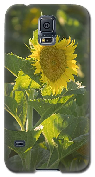Sunlight And Sunflower 3 Galaxy S5 Case