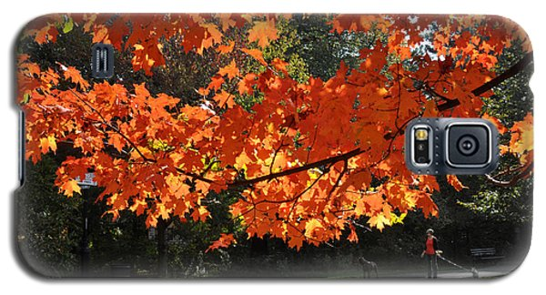 Sunlight On Red Maple Leaves Galaxy S5 Case