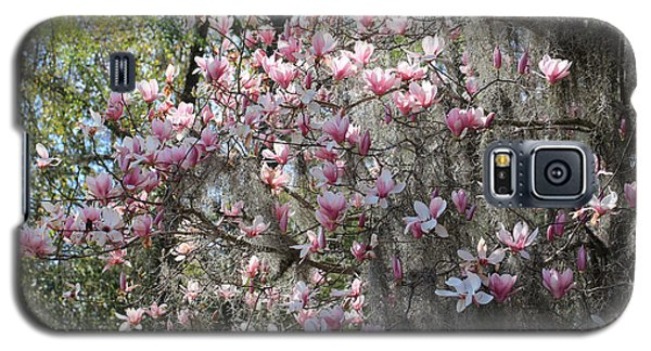 Saucer Magnolia Galaxy S5 Case - Sunlight On Saucer Magnolias by Carol Groenen