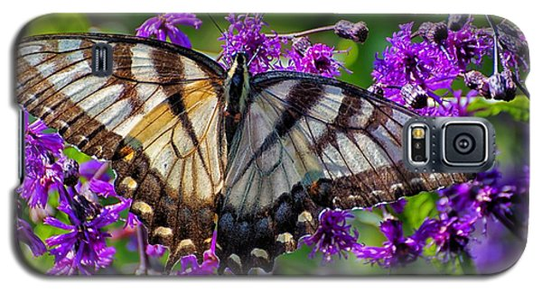 Sunlight On Swallowtail Galaxy S5 Case