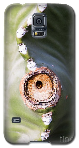Galaxy S5 Case featuring the photograph Sunlight Split On Cactus Knot by John Wadleigh