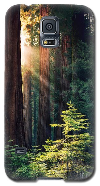 Sunlit From Heaven Galaxy S5 Case