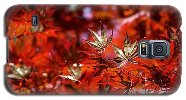 Sunlit Japanese Maple Galaxy S5 Case